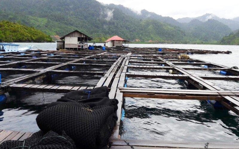 Kerambah budi daya ikan kerapu yang ada di Mandeh Kabupaten Pesisir Selatan, Sumatra Barat. - Ist