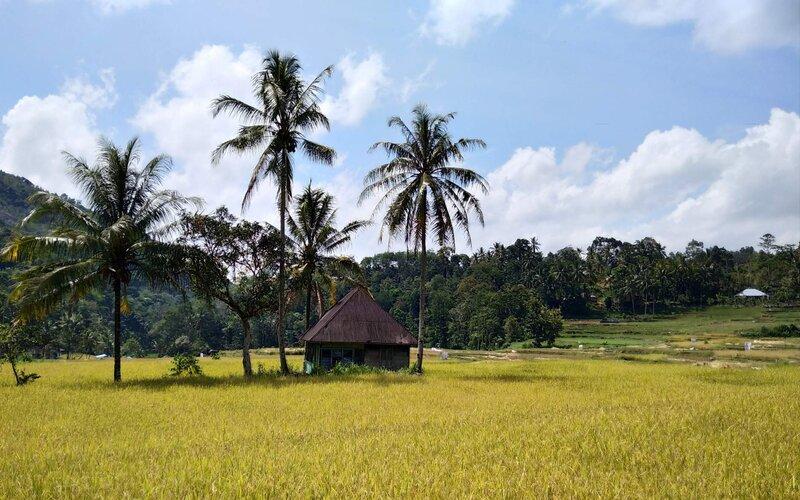 Hamparan sawah yang ada di Desa Indudur Kabupaten Solok, Sumatra Barat, yang kini tengah memasuki musim panen. - Bisnis/Noli Hendra