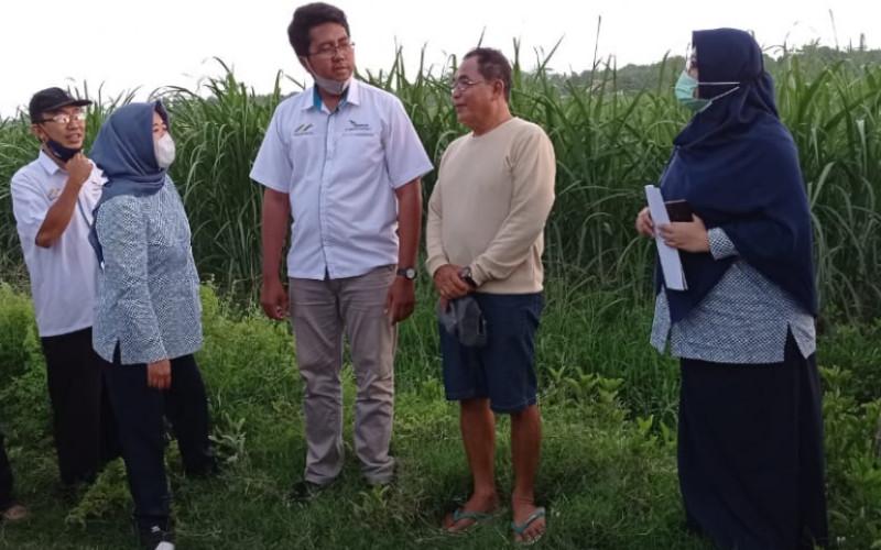 Petani Tebu. Survei kelayakan telah dilakukan terhadap petani mitra pabrik gula di wilayah Madiun, Magetan, dan Ngawi selama 2 hari, yakni pada Rabu-Kamis (18-19/11/2020).  - PTPN XI