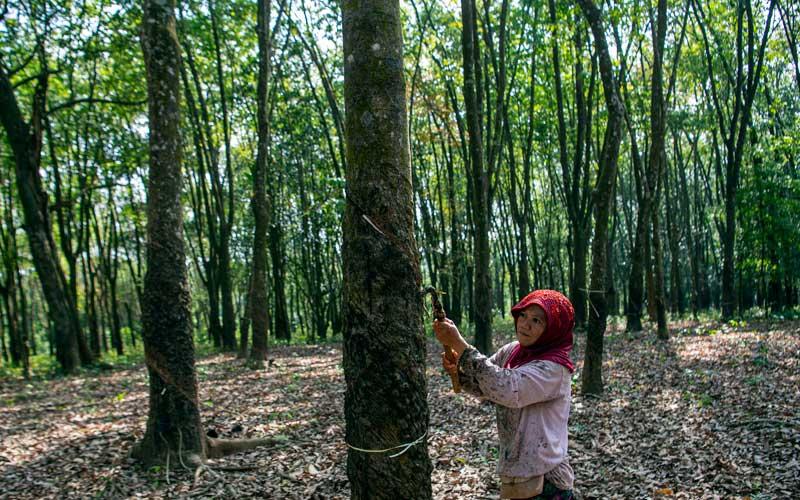 Petani menyadap karet di Musi Banyuasin, Sumatra Selatan./Antara - Nova Wahyudi