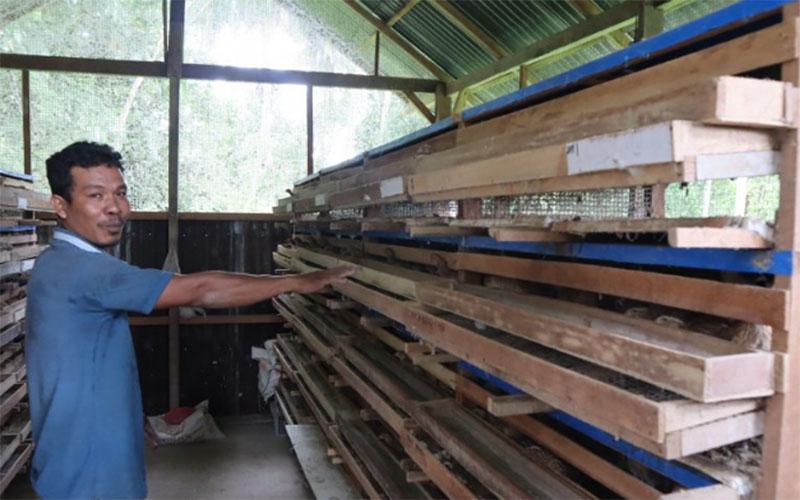 Seorang pengelola pembudi daya puyuh di Desa Kaluat, Kecamatan Pariaman Timur, Kota Pariaman, Sumbar, Afridoni, melihat kondisi kandang burung puyuh yang dikelolanya. - Antara