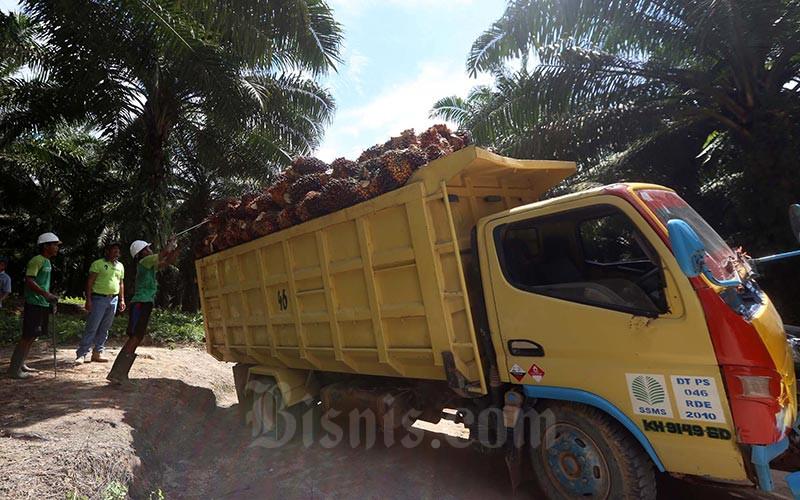 Petani membawa kelapa sawit hasil panen harian di perkebunan milik PT Sawit Sumbermas Sarana Tbk, di kawasan Pangkalan Bun, Kalimantan Tengah, Rabu (11/5). Bisnis - Nurul Hidayat
