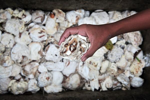 Petani mengumpulkan getah karet hasil panen di perkebunan Bathin II Babeko, Bungo, Jambi, Sabtu (30/3/2019). Harga jual getah karet di tingkat petani setempat berangsur naik dari Rp8.000 per kilogram pada minggu lalu menjadi Rp8.200 per kilogram per hari ini. ANTARA FOTO - Wahdi Septiawan
