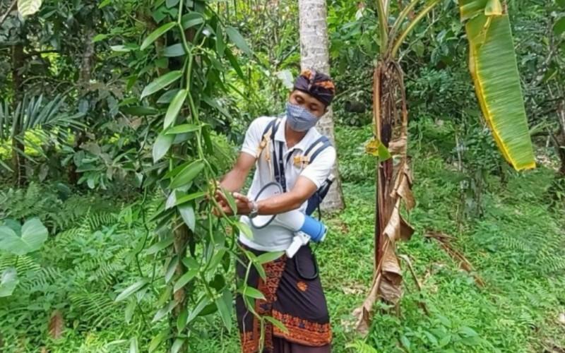 Potensi agrowisata Tabanan