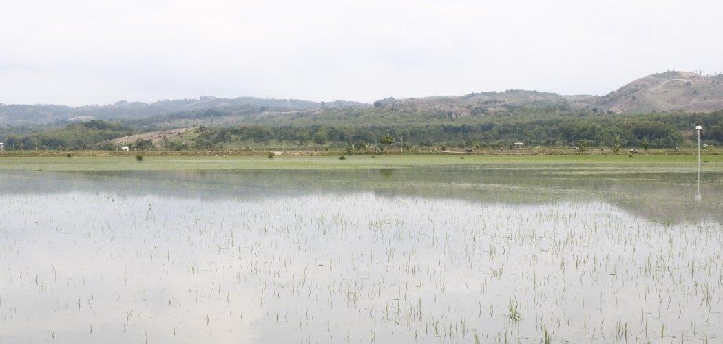 Curah hujan tinggi menyebabkan lahan pertanian di Desa Wonosoco, Undaan, Kudus tergenang banjir. (Muhammad Faisal Nur Ikhsan - JIBI)