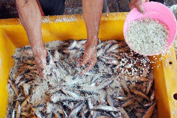 Pekerja melakukan proses penggaraman ikan asin di Pekalongan, Jawa Tengah, Selasa (25/7). Selain penggaraman, penanganan pascapanen suhu rendah dapat dilakukan dengan cara pembekuan.  - ANTARA/Harviyan Perdana Putra