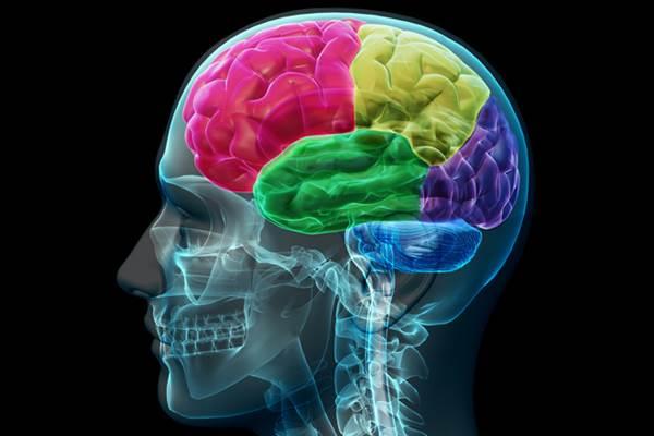 Otak - medicaldaily.com