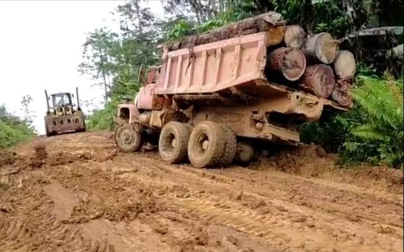 Pohon hasil tebangan diangkut truk - Istimewa