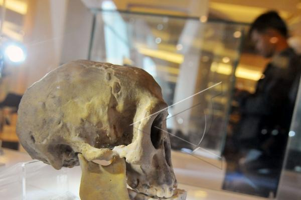 Ilustrasi: Fosil manusia purba Sangiran - Antara/Zabur Karuru