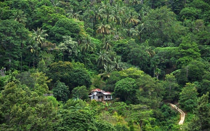 Kawasan hutan yang ada di Teluk Bayur, Kota Padang, Sumatra Barat. - Bisnis/Noli Hendra