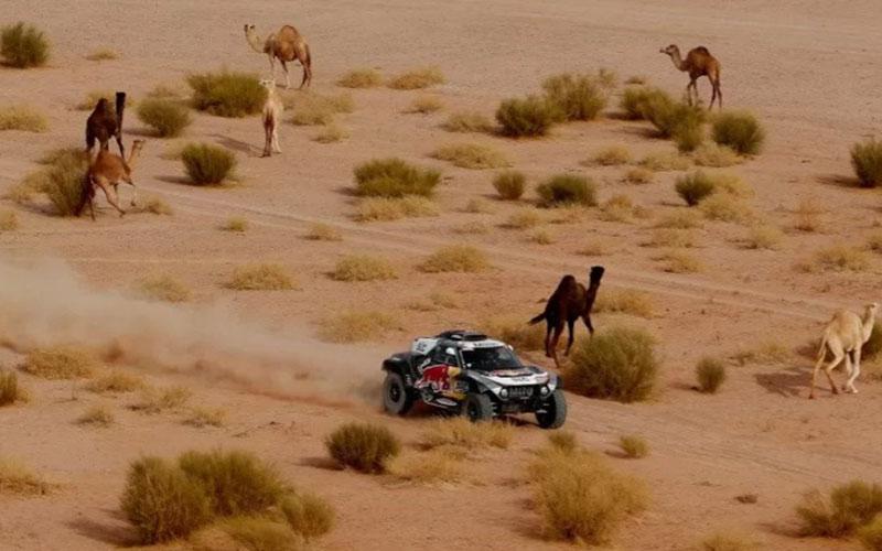 Pebalap tim X-Raid Mini Stephane Peterhansel dan co-pilot Edouard Boulanger menjalani etape 10 Reli Dakar 2021 dari Neom ke Alula, Arab Saudi, pada Rabu (13/1/2021)./Antara - Reuters