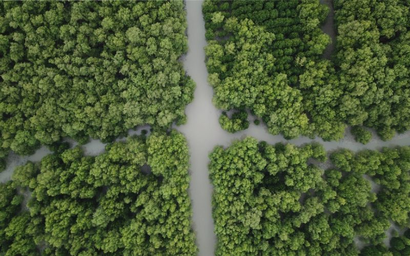 Hutan Mangrove. Berdasarkan data KKP, luas mangrove di Indonesia mencapai 3,49 juta ha dengan komposisi 2,17 juta hektare wilayah hutan dan 1,32 Juta hektare nonhutan.  - KKP