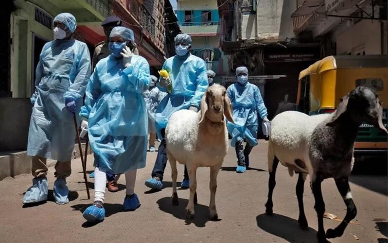 Petugas medis menggunakan alat pelindung diri saat berjalan melewati domba untuk melakukan verifikasi dari rumah ke rumah apabila ditemukan kasus atau gejala terkait Virus Corona di sebuah wilayah pemukiman di Ahmedabad, India, Kamis (23/4/2020). - Antara/Reuters