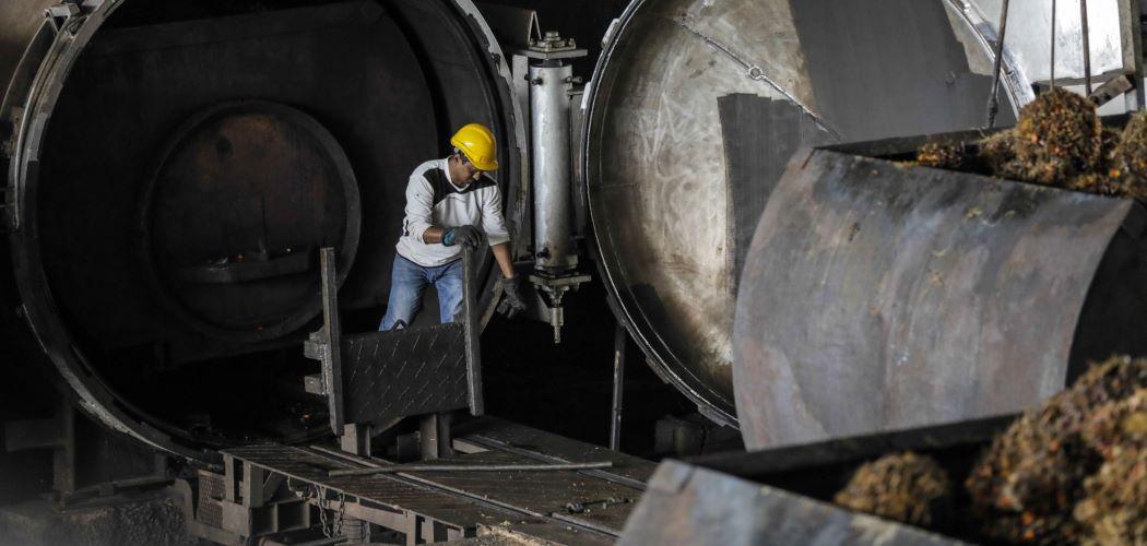Pekerja di pabrik sawit mengolah tandan buah segar menjadi CPO. - Bloomberg / Joshua Paul