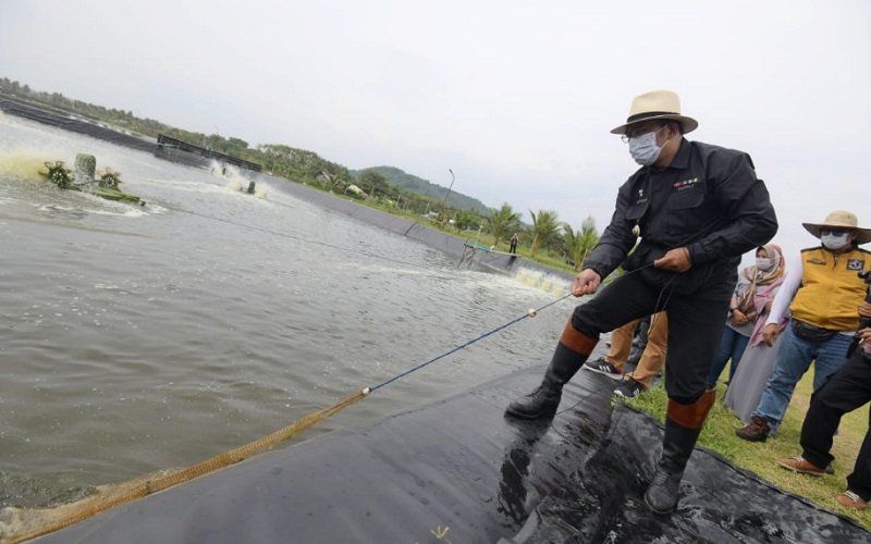 Gubernur Jawa Barat Ridwan Kamil saat meninjau tambak udang Qini Vaname Pesantren Tharekat Idrisiyyah - Istimewa