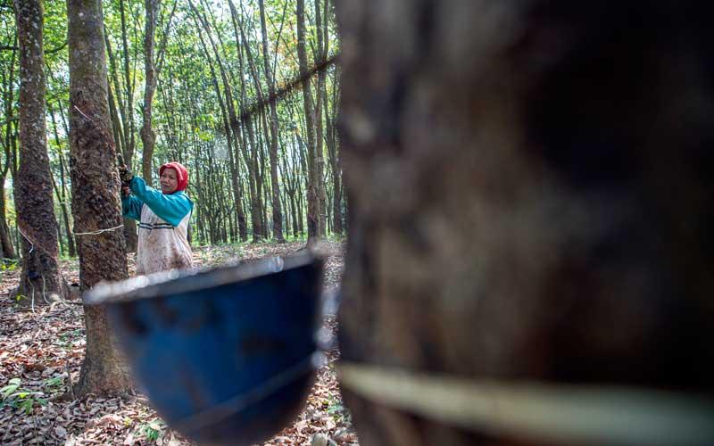 Petani menyadap karet di Palembang, Sumatera Selatan, Selasa (29/9/2020). - Antara/Nova Wahyudi