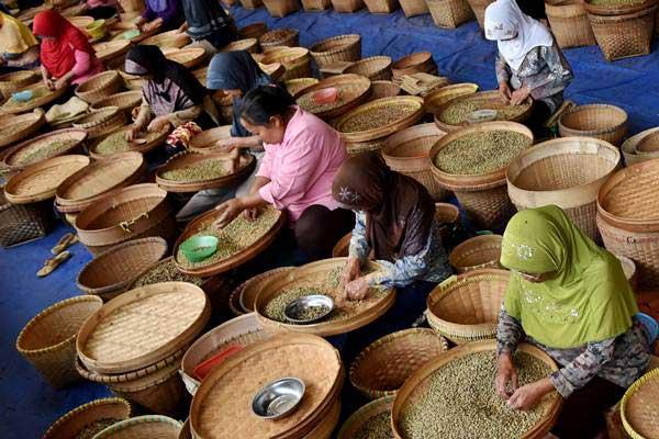 Pekerja menyortir biji kopi. - Antara/Aditya Pradana Putra