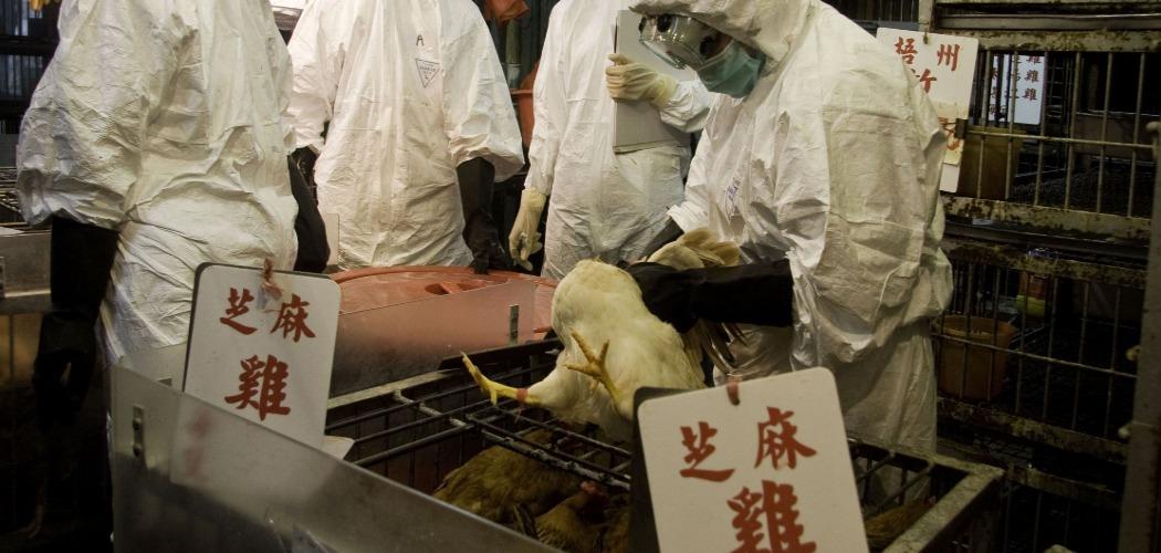 Pekerja yang mengenakan pakaian pelindung berpartisipasi dalam penyembelihan sekitar 2.700 ayam di sebuah pasar di distrik Kowloon, Hong Kong. - Bloomberg/Jerome Favre