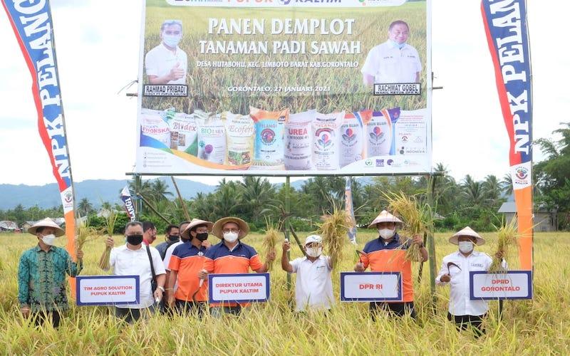 Direktur Utama Pupuk Kaltim Rahmad Pribadi (empat kanan) bersama Wakil Ketua DPR RI Rachmat Gobel (dua kanan) melakukan panen bersama demplot tanaman padi sawah program Agrosolution di Gorontalo, Rabu (27/1). - JIBI/Istimewa