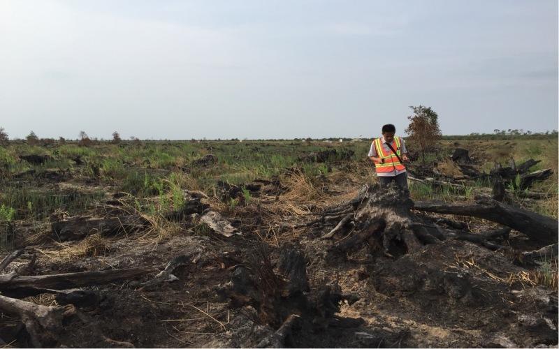 Petugas KLHK memeriksa lokasi kebakaran lahan atas konsesi PT Rambang Agro Jaya di Kabupaten Ogan Komering Ilir, Sumatra Selatan. istimewa