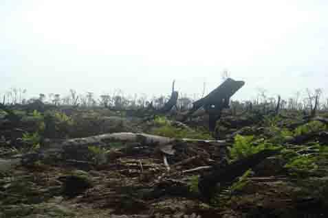 Hutan adat yang semakin terkikisa akibat pembalakan liar dan pembukaan lahan atas nama investasi.