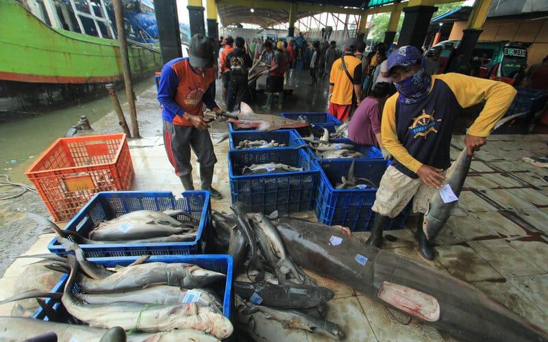 Pekerja mengumpulkan ikan hasil tangkapan nelayan di tempat pelelangan ikan Karangsong, Indramayu, Jawa Barat, Minggu (31/1/2021). Kementerian Kelautan dan Perikanan (KKP) mencatat Penerimaan Negara Bukan Pajak (PNBP) perikanan tangkap pada tahun 2020 mencapai Rp600,4 miliar, meningkat dari tahun 2019 yang hanya mencapai sebesar Rp521,37 miliar. - Antara/Dedhez Anggara.