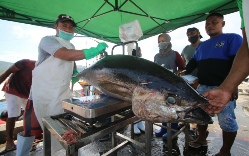 Ikan Tuna. Sertifikasi MSC melibatkan 380 kapal penangkap ikan yang tersebar di kepulauan Indonesia, mulai dari Sulawesi Utara dan Maluku Utara hingga ke Laut Banda, dan Flores Timur dan Barat.  - KKP