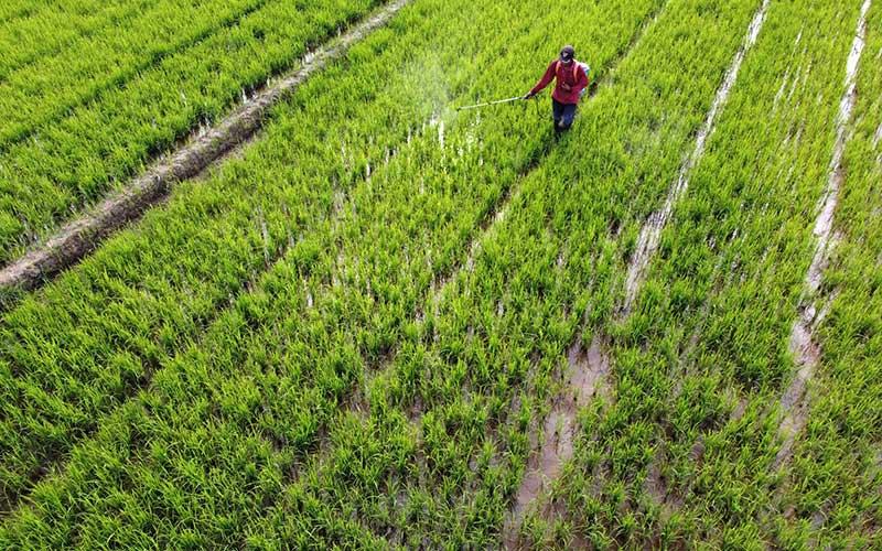 Petani melakukan penyemprotan pestisida organik pada tanaman padi di areal persawahan Kecamatan Ranomeeto, Konawe Selatan, Sulawesi Tenggara, Senin (7/9 - 2020). Perum Bulog Kanwil Sulawesi Tenggara mencatat telah menyerap sebanyak 17.600 ton beras petani dari target 20 ribu ton serapan beras di tahun 2020. ANTARA FOTO