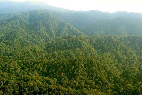Ilustrasi hutan di Papua.