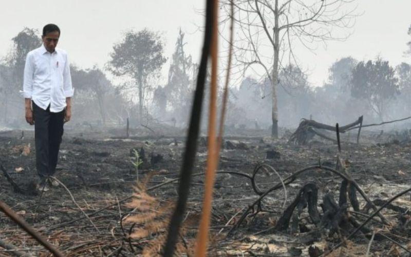 Presiden Joko Widodo (Jokowi) memantau lokasi kebakaran hutan / Dok. Sekretariat Kepresidenan