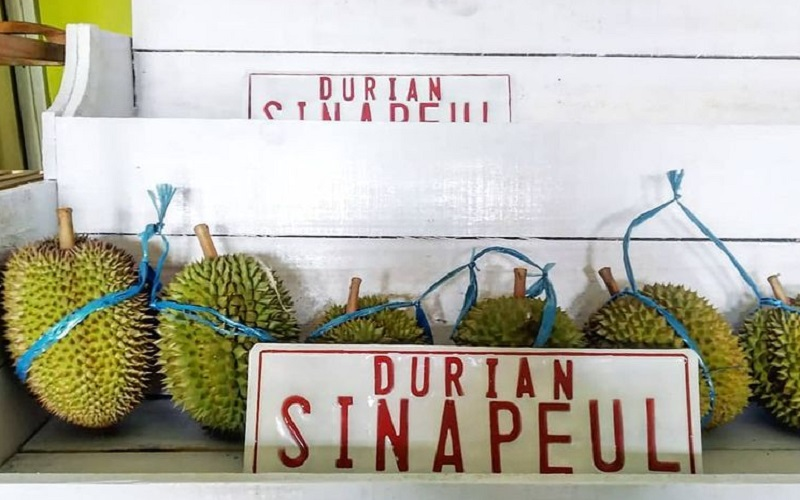 Durian Sinapeul khas Majalengka - Istimewa