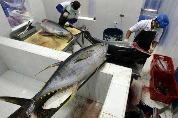 Pekerja membersihkan dan memotong ikan tuna untuk diekspor di tempat pengolahan. - ANTARA/Irwansyah Putra