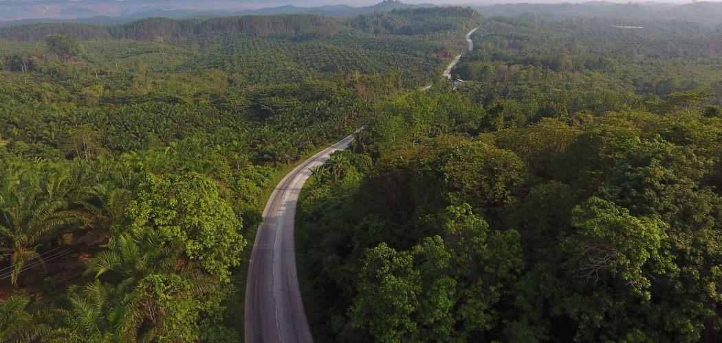 Sebuah jalan melewati perkebunan pohon kelapa sawit di Kalimantan, Indonesia.