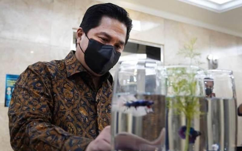 Menteri BUMN Erick Thohir sedang mengamati ikan cupang - Instagram/Erick Thohir