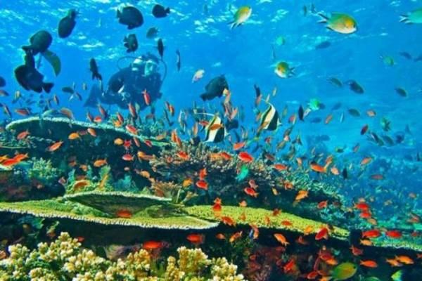 Dokumen foto pemandangan bawah laut Sawarkawafor di Kabupaten Kabupaten Supiori dan Biak Numfor, Papua. - Istimewa