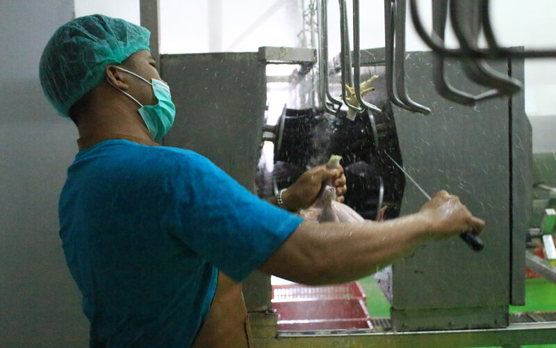 Para pekerja tengah memotong ayam setelah dilakukan proses sembelih di Rumah Potong Unggas (RPU) yang ada di Kelurahan Air Pacah, Kecamatan Koto Tangah, Kota Padang, Sumbar, Kamis (25/3/2021). - Bisnis/Noli Hendra