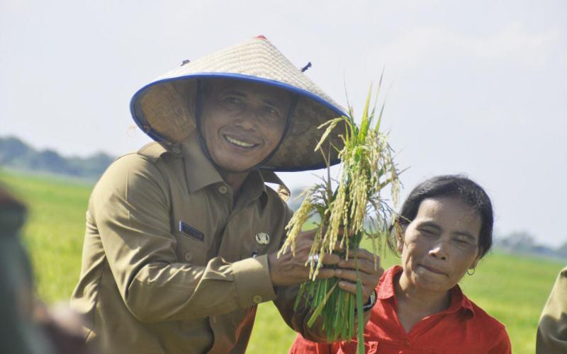Bupati Kabupaten Ogan Komering Ilir Iskandar saat melakukan panen raya padi. - Istimewa
