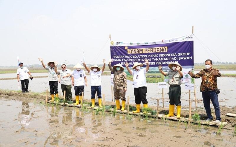 Tanam perdana padi di Desa Pancakarya, Kecamatan Tempuran, Kabupaten Karawang