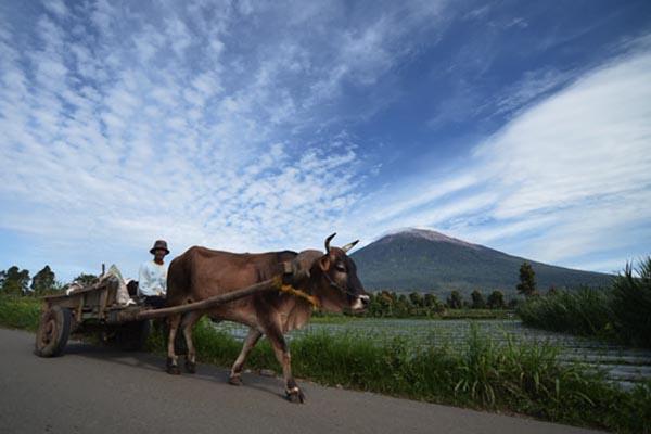 Keindahan kawasan Kayu Aro di kaki Gunung Kerinci, Jambi - Antara