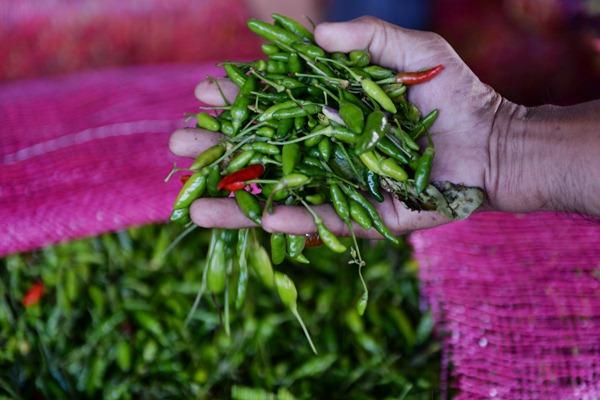 Pedagang cabai rawit. - Bloomberg/Dimas Ardian