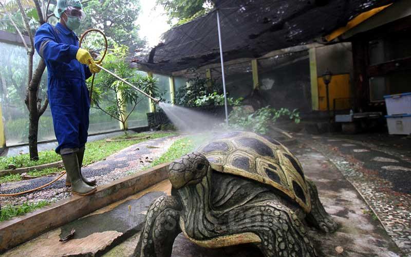 Petugas menyemprotkan cairan disinfektan di area Museum Fauna Indonesia Komodo dan Taman Reptilia di kawasan wisata Taman Mini Indonesia Indah (TMII), Jakarta, Selasa (18/3/2020). Pengelola TMII secara bertahap melakukan rangkaian tindakan disinfeksi di setiap lokasi wisata dan anjungan sebagai antisipasi terhadap penyebaran virus Corona (Covid-19). Bisnis - Arief Hermawan P