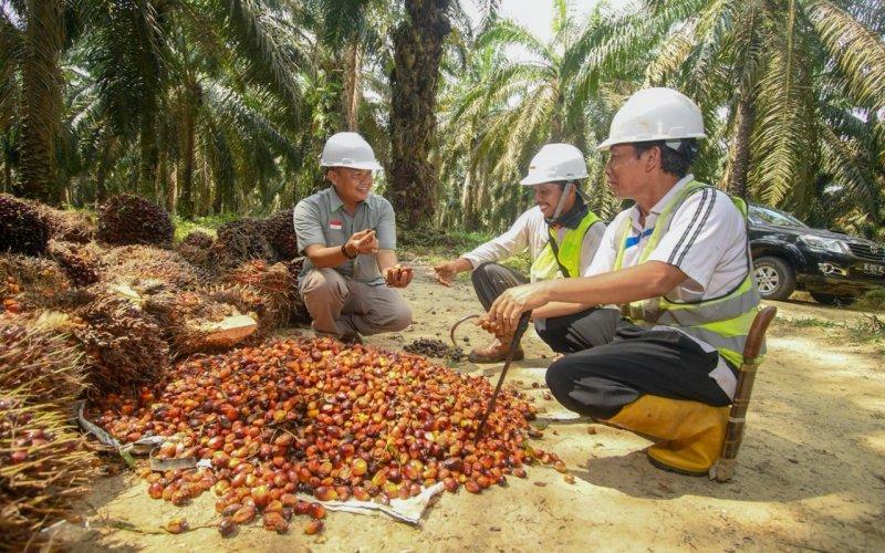 Petani sawit mendapatkan pembinaan dari Cargill terkait peningkatan produktivitas kebun untuk menunjang pendapatan petani. istimewa