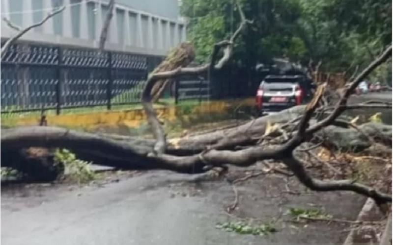 Pohon tumbang di kawasan Stadion Sriwijaya Palembang akibat angin kencang, Sabtu (10/4/2021). - Antara\r\n\r\n
