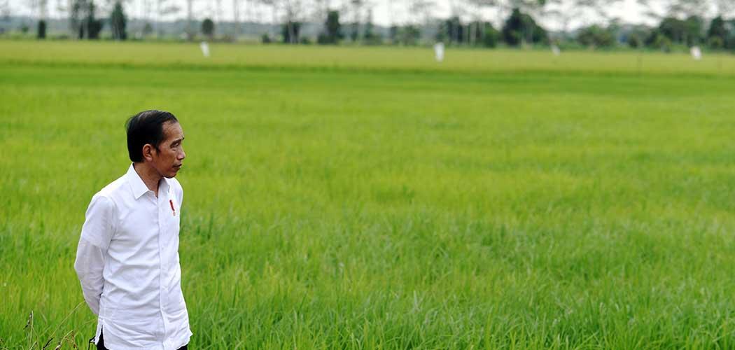 """Presiden Joko Widodo meninjau lahan yang akan dijadikan """"Food Estate"""" atau lumbung pangan baru di Kapuas, Kalimantan Tengah, Kamis (9/7/2020). Pemerintah menyiapkan lumbung pangan nasional untuk mengantisipasi krisis pangan dunia. ANTARA FOTO - Hafidz Mubarak A"""