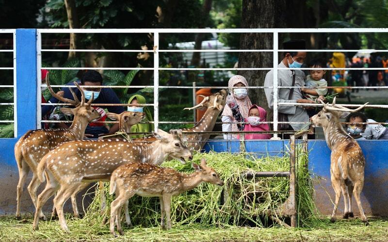 Warga memberi makan rusa di Taman Flora Jalan Manyar, Surabaya, Jawa Timur, Sabtu (10/4/2021). Pemkot Surabaya membuka kembali delapan taman kota. - Antara/Didik Suhartono