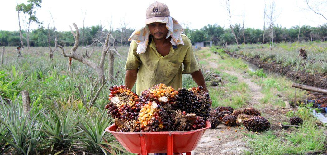 Seorang pekerja mengangkut Tandan Buah Segar (TBS) kelapa sawit dari dalam rakit di Desa Rantau Bais, Rokan Hilir, Riau, Senin (8/3/2021). (ANTARA FOTO - Aswaddy Hamid)