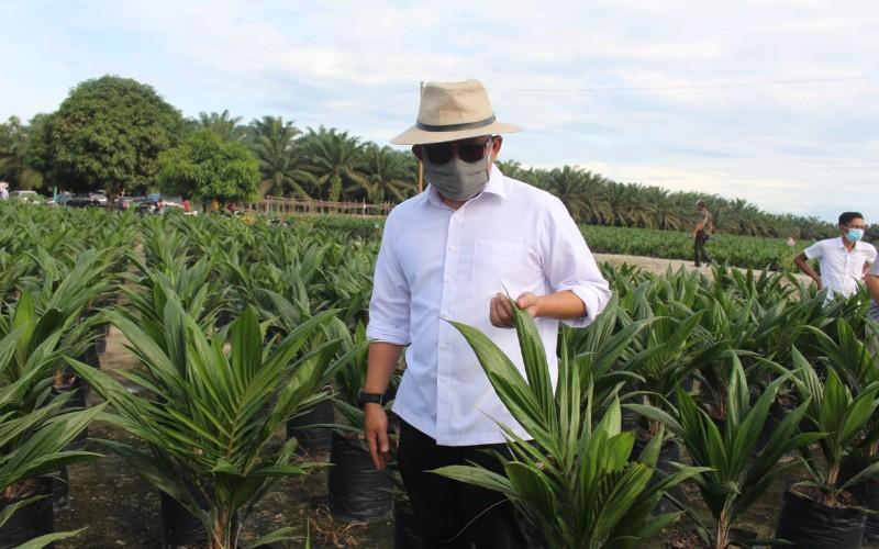 Chief Executive Officer PTPN V, Jatmiko K Santosa, meninjau salah satu lokasi pembibitan sawit unggul PTPN V. Perusahaan perkebunan negara tersebut menargetkan menjual 1,1 juta bibit unggul sawit pada 2021 ini. Penjualan bibit sawit dilakukan salah satunya melalui aplikasi berbasis Android
