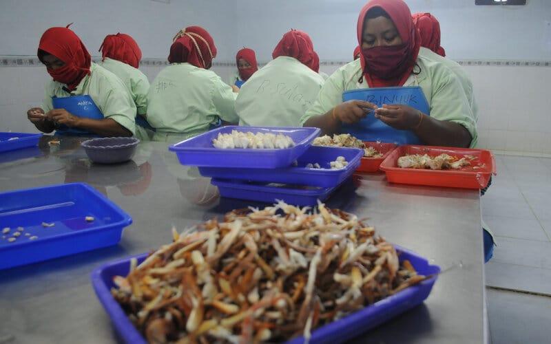 Pekerja memisahkan daging rajungan dari cangkangnya. Ilustrasi. - Antara/Saiful Bahri.