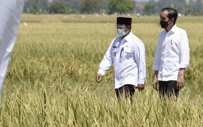 Wakil Gubernur Jawa Barat Uu Ruzhanul Ulum mendampingi Presiden RI Joko Widodo meninjau aktivitas panen padi di Desa Wanasari, Kabupaten Indramayu, Rabu (21/4 - 2021).