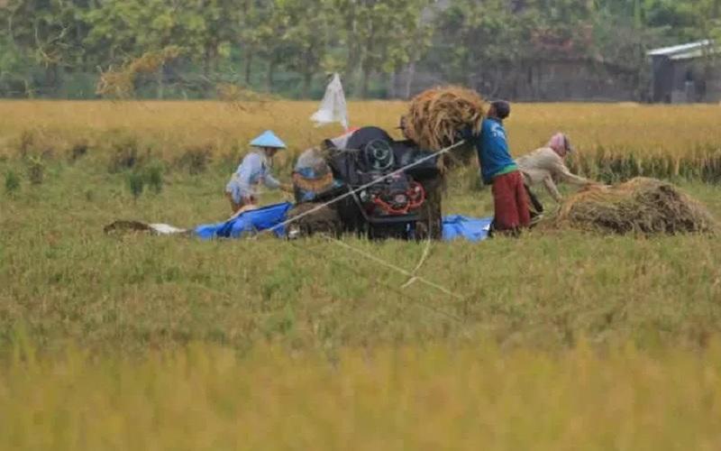 Petani memanen padi di areal sawah desa Pabean udik, Indramayu, Jawa Barat, Sabtu (20/3/2021). - Antara\r\n